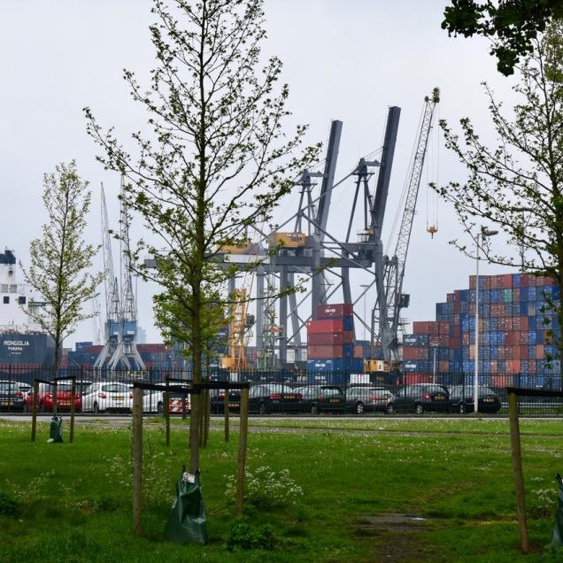 Bedrijvigheid in Waalhaven